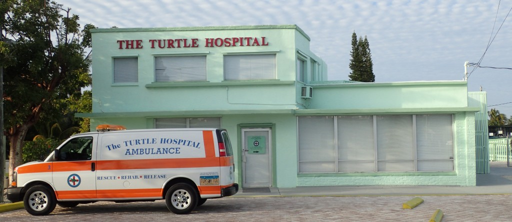turtlehospital