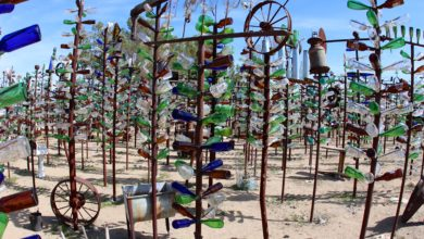 glass bottle tree ranch