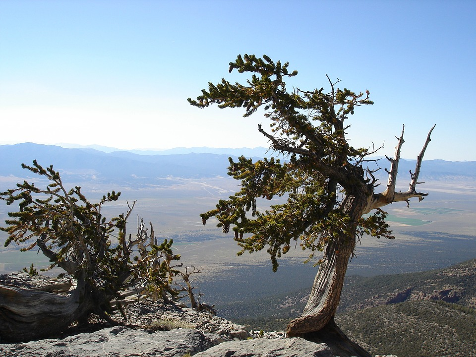 great basin nationalpark