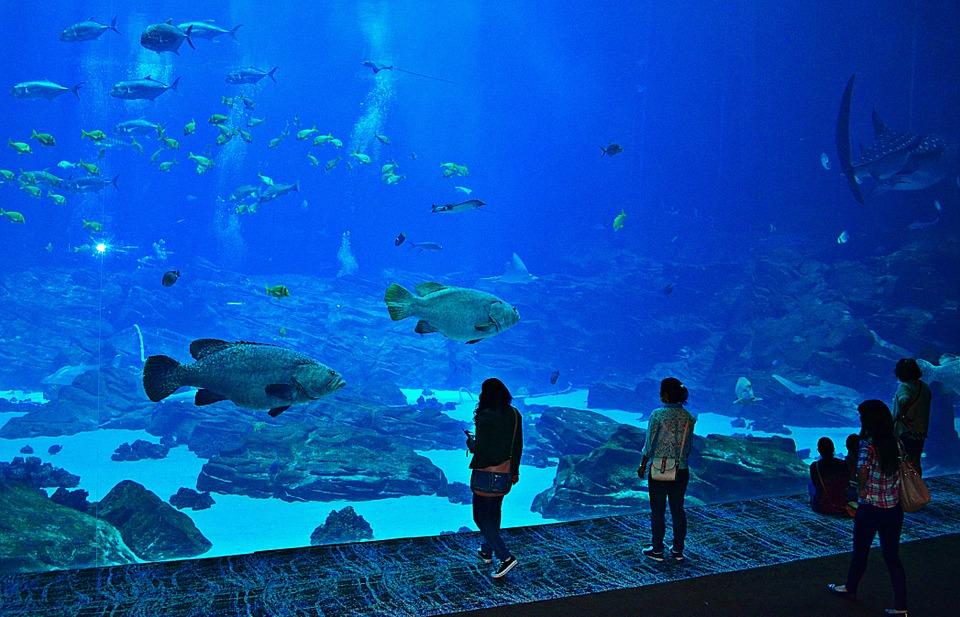 akvarium atlanta
